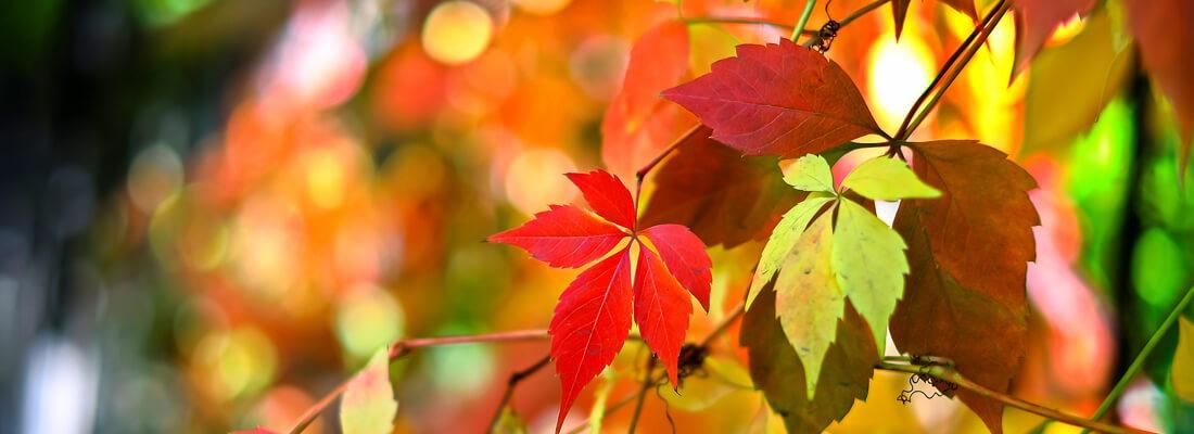 Herfst is de tijd om lekker tot jezelf te komen